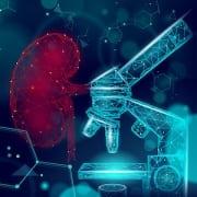 Human Kidneys Medicine Microscope